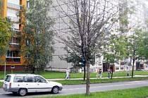 V ulicích Havířova usychají stromy