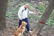 Na kraji městské části Šumbark někdo nařezal pilou kmeny stromů, které úřad nepovolil kácet.