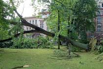 Větrná smršť, která řádila v Masarykových sadech loni v červnu, vyvrátila řadu vzrostlých stromů.