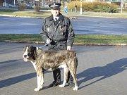 Odchyt psů havířovskými strážníky
