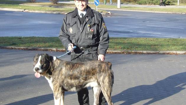 Tento pes zranil strážníka. Při dřívějším odchytu byl naprosto klidný.