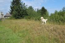 Ochranný val, který má zabránit zaplavení jeho pozemku, si vybudoval pan Petr Láznička ze Závady. Po valu běhá i jeho pes.