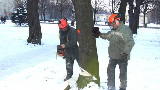 Dřevorubci při zimní údržbě veřejné zeleně