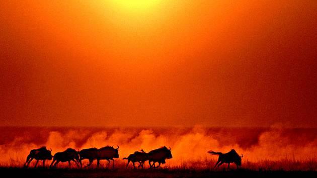 Chris Johns takto fotografuje Afriku. Ze současné výstavy, která bude otevřena pro veřejnost v sobotu na Slezskoostravském hradě.