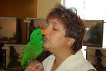 Výstava exotického ptactva v Bohumíně