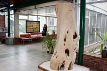 Strom života ve vestibulu havířovské nemocnice