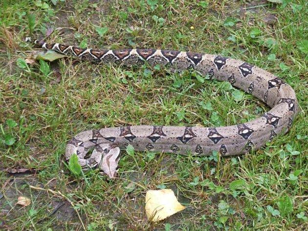 Had byl v chladném počasí velmi klidný. Přesto se k němu nikdo raději nepřibližoval. Do rukou ho vzal jen majitel.
