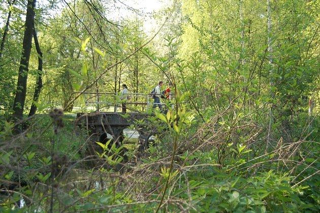 Zahrádkáři z karvinské osady Starý dvůr upozornili na zanedbaný stav lesního porostu v blízkosti tamní nemocnice.