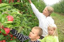 Ovocnářské sady v Havířově Živiticích