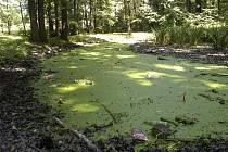 Karvinské lesoparky jsou v hrozném stavu. Snímky jsou z lesoparku Dubina