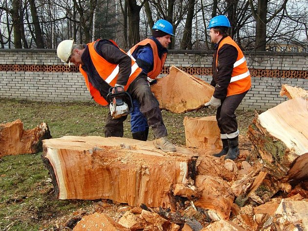 Dřevorubci kácejí strom za stromem.
