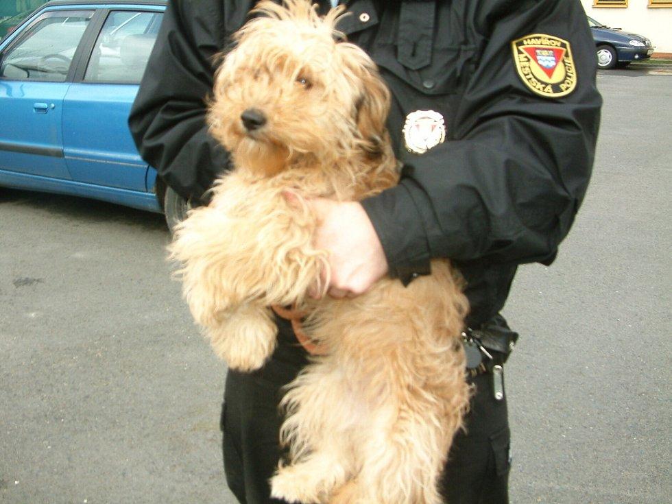 Jeden z odchycených psů