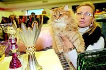 Ostrava hostila stovky ušlechtilých koček.
