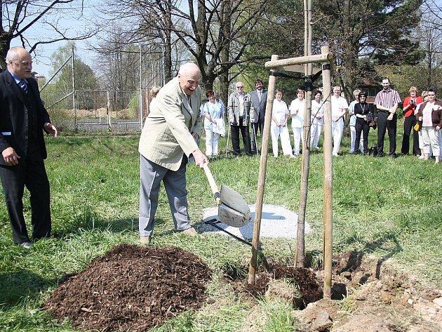 Zasazení stromu osobnosti v zahradě havířovské nemocnice