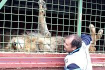 Cirkus Carini má v programu show se lvy