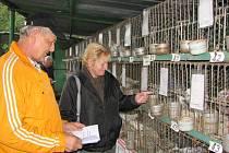 Chovatelská výstava v Těrlicku