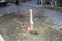 Auto ve smyku přerazilo stromek.