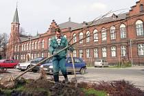 Nové lípy zasadili počátkem týdne dělníci na náměstí v Novém Bohumíně.