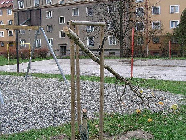Vandal uřezal pilou mladý stromek