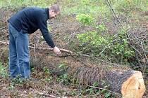 Správci lesů sledují vývoj škodlivého brouka, když v jednotlivých lokalitách nechávají kmeny stromů.