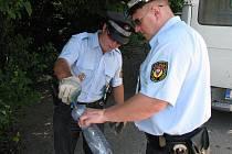 Strážníci při sběru rizikového odpadu - jehel a stříkaček po narkomanech