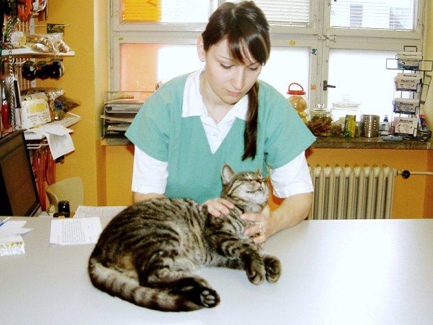 Lidé krmící toulavé kočky, by měli mít na paměti, že tato zvířata mohou být nositeli nemocí.