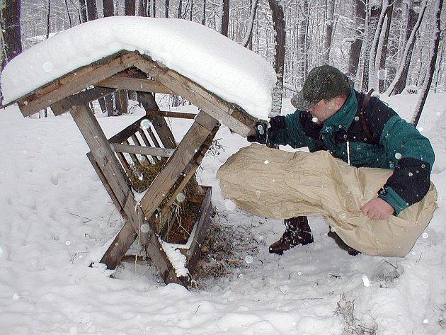 Myslivci zvěř v zimě přikrmují. Ilustrační foto