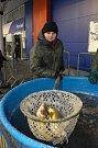 Předvánoční prodej ryb