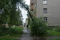 Vyvrácený strom se opřel o dům