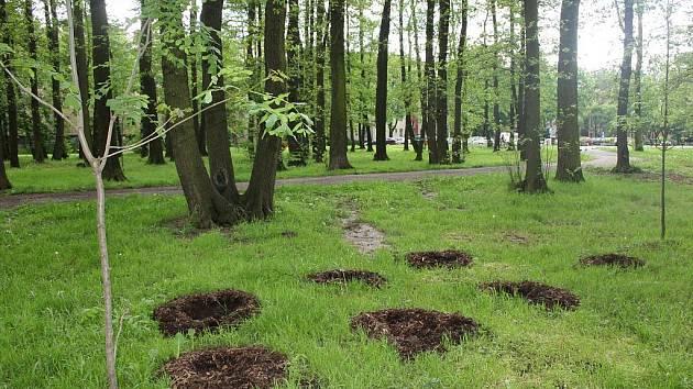 Zloději  v lese ukradli stromky