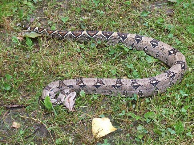 Toto je had cestovatel