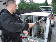Strážníci se museli postarat o uprchlou kozu