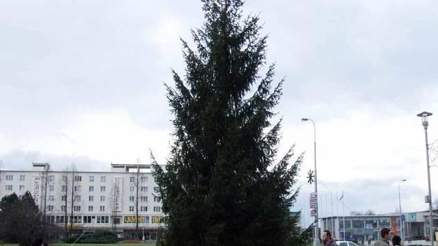 Vánoční strom před OD Elan.