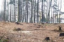 Lidem vadí, že lesy řídnou.