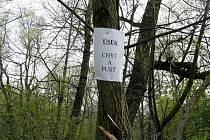 Vandalské plakáty na stromech u řeky Lučiny.