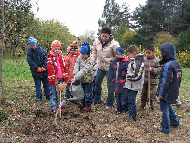 Prvňáčci vysadili ve školní zahradě medonosnou lípu.