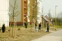 Horní Suchá investovala několik milionů do obnovy zeleně.