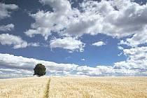 Ochutnávka z Šoferovy výstavy. Fotografie zachycuje pole a oblohu poblíž Jilešovic.