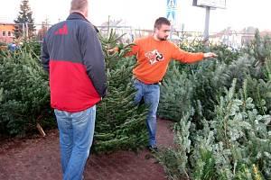 Vánoční stromky se prodávají také u obchodního centra Silesia v Opavě.