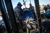 Výlov dolnobenešovského Nezmaru patří tradičně mezi velké události a nejinak tomu bylo také letos. Slunečné počasí nakonec nepřálo jen rybářům, ale také tisícovkám návštěvníků.