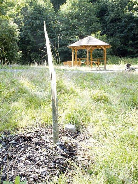 Po nedávno zasazeném stromku zůstal jen pahýl. Někdo ho ulomil jen tak pro zábavu.