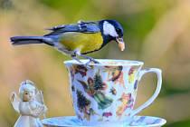 Krmení ptáčků na zimu.