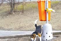 Pokud jste nevěděli, jak takový psí pisoár vypadá, tak nyní už to víte.  Tento je nainstalován v Brně a je určen pouze pro psí kluky.