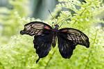 Jedenáctý ročník výstavy tropických motýlů v Arboretu Nový Dvůr.