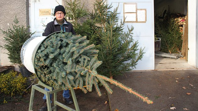 Prodej vánočních stromků odstartoval. Řada lidí využila už prvních dní a nedílnou součást Vánoc ve většině domácností si pořídila s předstihem.