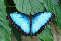 Návštěvníci budou mít možnost v arboretu obdivovat krásné tropické motýly.