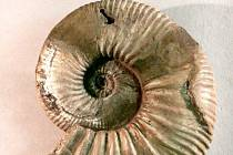 Amoniti – ozdoby i dravci dávno zaniklých moří. Výstava, která je v současné době instalována ve Slezském zemském muzeu.