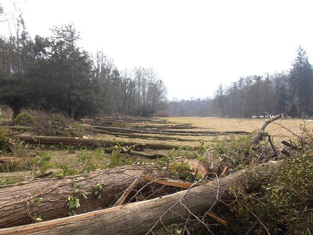 V Raduni v minulých týdnech a měsících proběhlo kácení stromů, které i v souvislosti s bezpečností musely ze zámeckého parku zmizet. Kmeny se odsud budou odvážet v příštích několika dnech.
