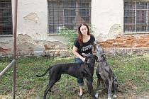 Dogy jsou nejlepší přátelé Pavly. Kdyby se jim mělo něco stát, nesla by to těžce.