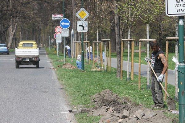Po několik následujících měsíců čekají návštěvníky Městských sadů vOpavě některá omezení. Začaly zde totiž rozsáhlé stavební práce na obnově a zatraktivnění parku vočích veřejnosti.